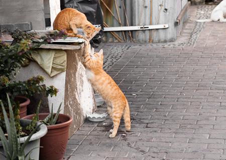 鹿港的貓咪